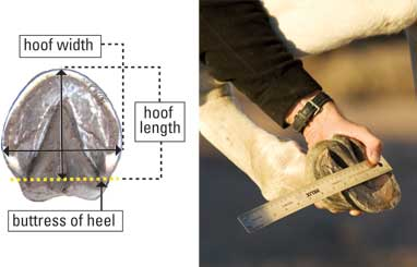 Hoof Measurement Diagram