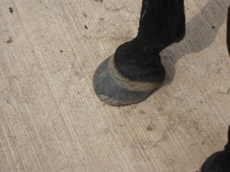 0714 Hoof Boot Testing 012