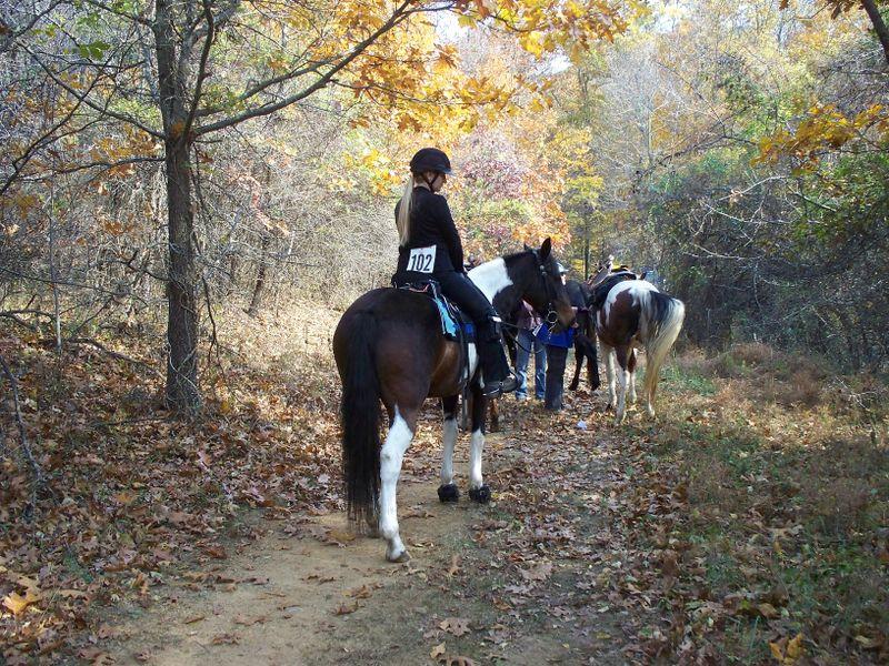 H Williams Babe Crystal Crown Judged Trail Ride VA 11 08