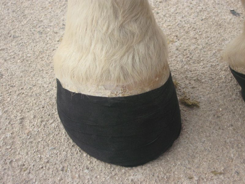 Easyboot Shell with athletic tape 006