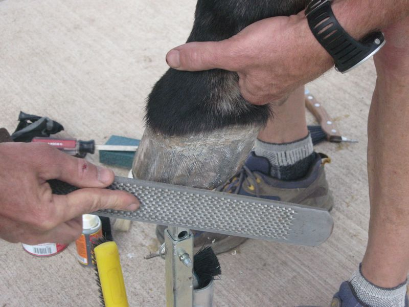Easyboot Glue Ons with Gorilla Glue and Athletic Tape 011