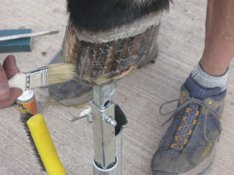 Easyboot Glue Ons with Gorilla Glue and Athletic Tape 016