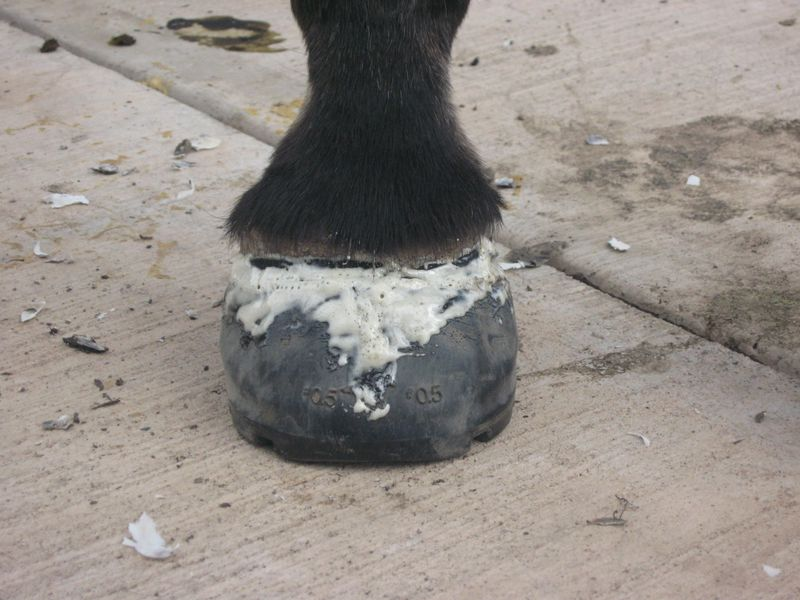 Easyboot Glue Ons with Gorilla Glue and Athletic Tape 041