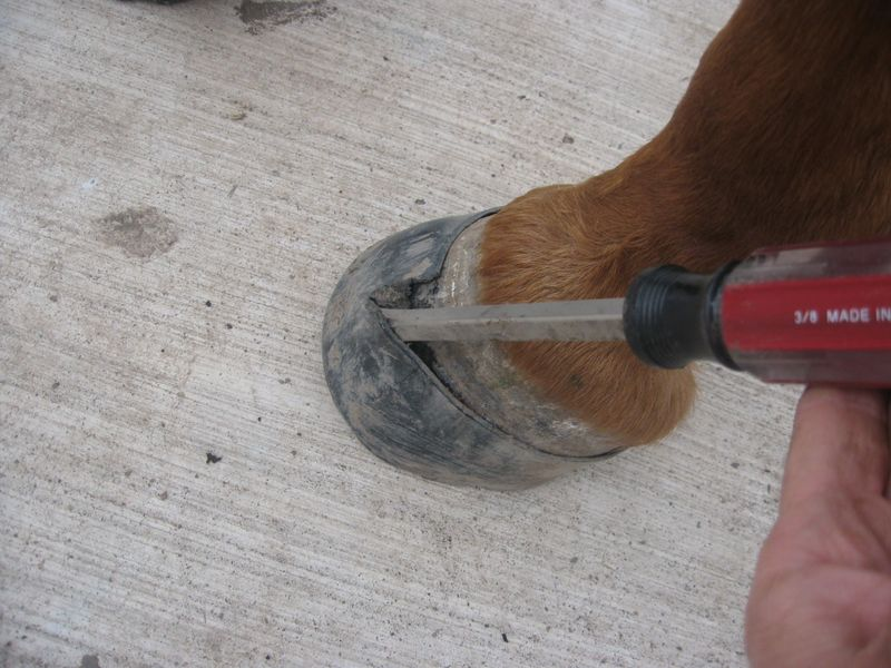 Hoof Condition after Easyboot Glue-On Removal 003
