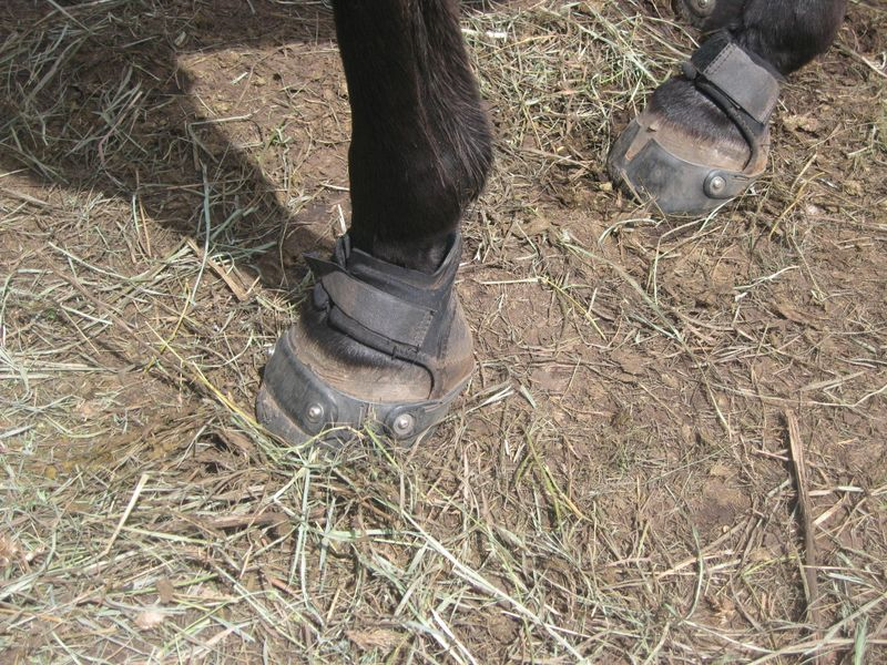 Sangre Scenic two day endurance ride in Easyboot Glue-Ons 035