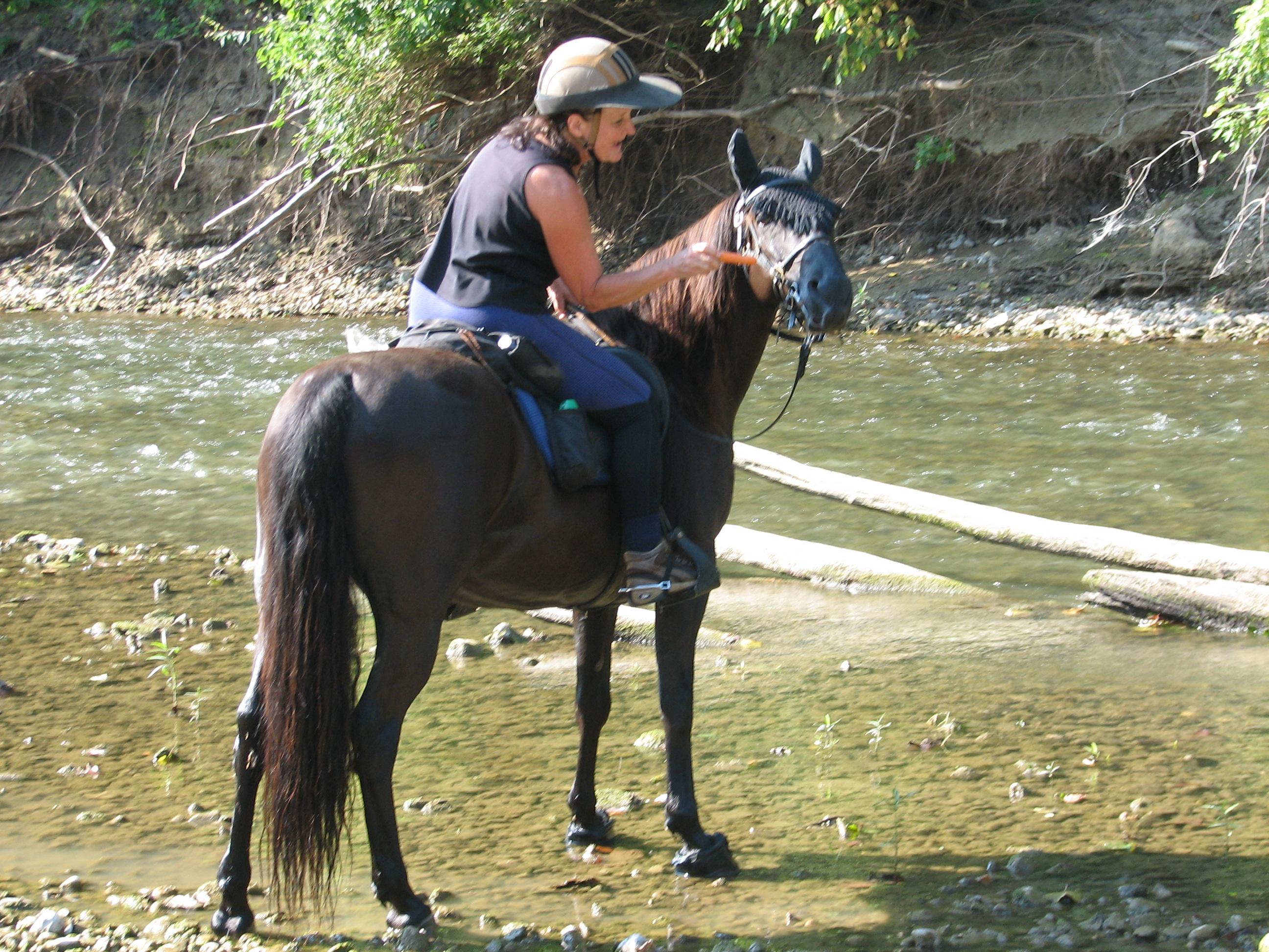 EASYCARE BOA HORSE HOOF BOOTS SIZE 0 HARDLY USED