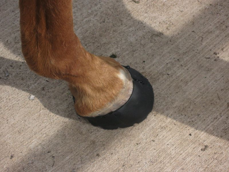 Hoof Boot Photos 006