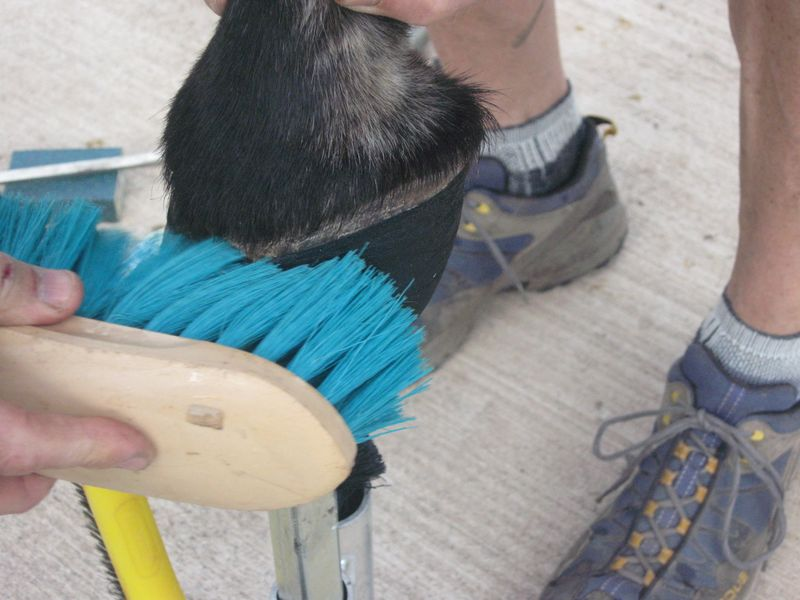Easyboot Glue Ons with Gorilla Glue and Athletic Tape 025