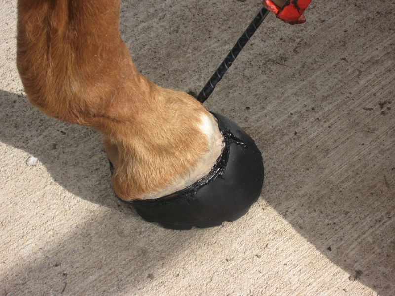 Hoof Boot Photos 007