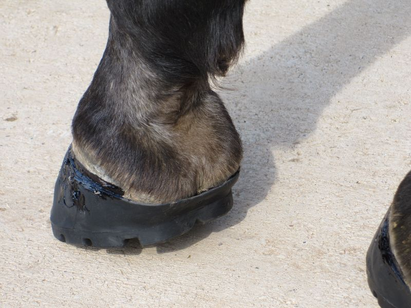 Hoof Adhesives 006