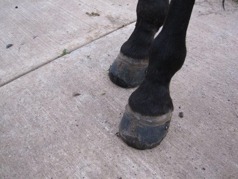 Hoof Boot Glue-On Method 018