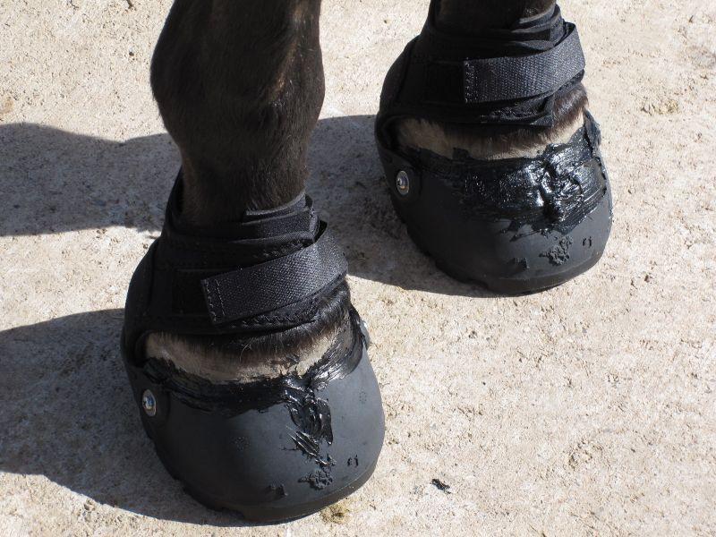 Hoof Boot Glue-On Method 009