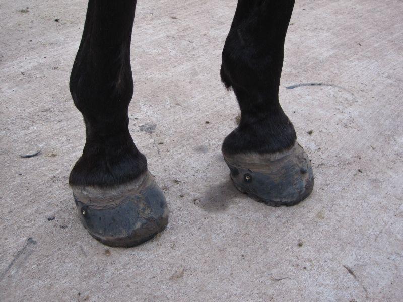 Hoof Boot Glue-On Method 020