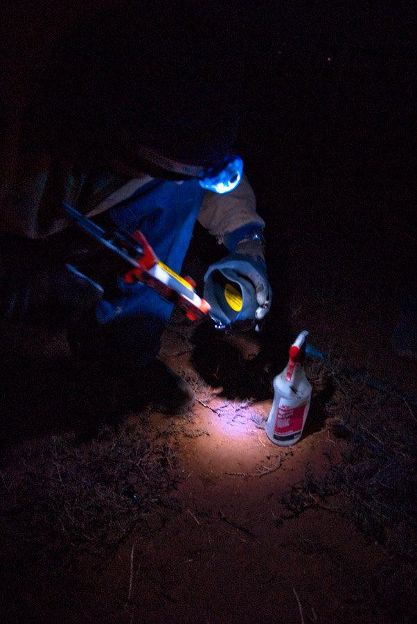 Garrett and Easyboot Glue-ons in the dark