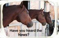 Newshorseslookingforweb