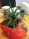 Easyboot_planter1