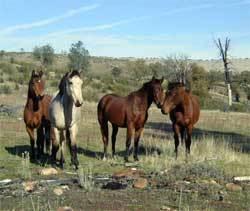 Wild_horse_territory