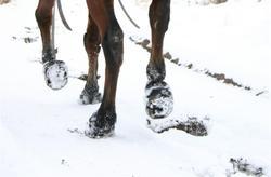 Tigger_snow_medium_4