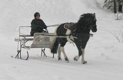 Boa_horse_boots_in_snow
