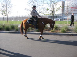 Easyboots_on_mounted_patrol_at_bcs_natio