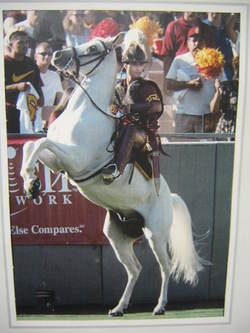 Usc_horse_in_easyboots