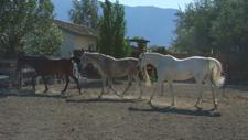Three_horses