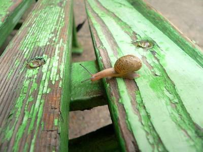 Snail1_2