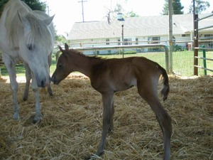 Crystal_and_new_foal_007
