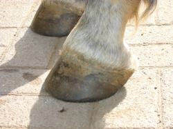 May_front_feet
